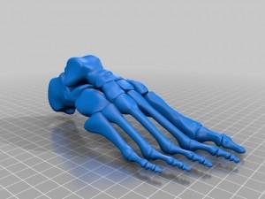 3D Image of Foot Bones